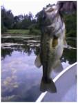 fishn2